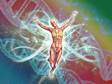 Different types of gene mutations have led to humans.
