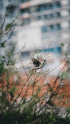 The Tiny Birds Helped the Man Understand the Meaning of Incarnation.