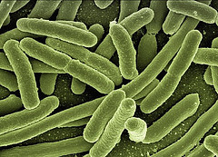 Solve Stress and Gastrointestinal Problems With Bacteria